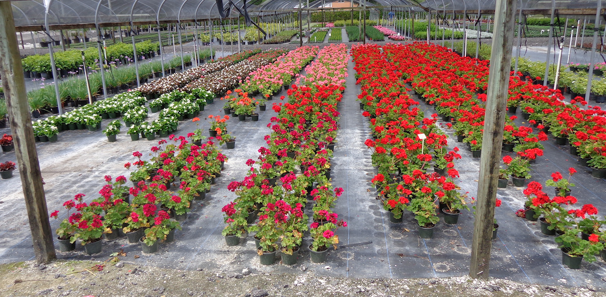 Sorry We Do Not Deliver Or Install Plants But Have Several Outsourced Help Available For Customer Needs Please Contact Us By Email In Person